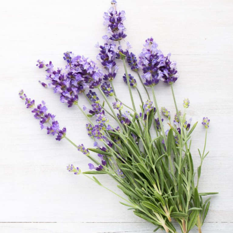 Natural Ingredient Lavender